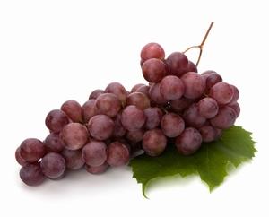 Vinova loza KALINA RED, saksija P9